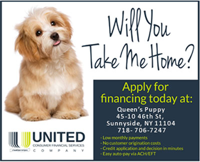 Queens Puppy Finance Your Puppy Puchase | Queens NY, NYC